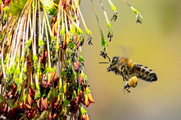 Gyűlnek az aláírások a méhek védelmében