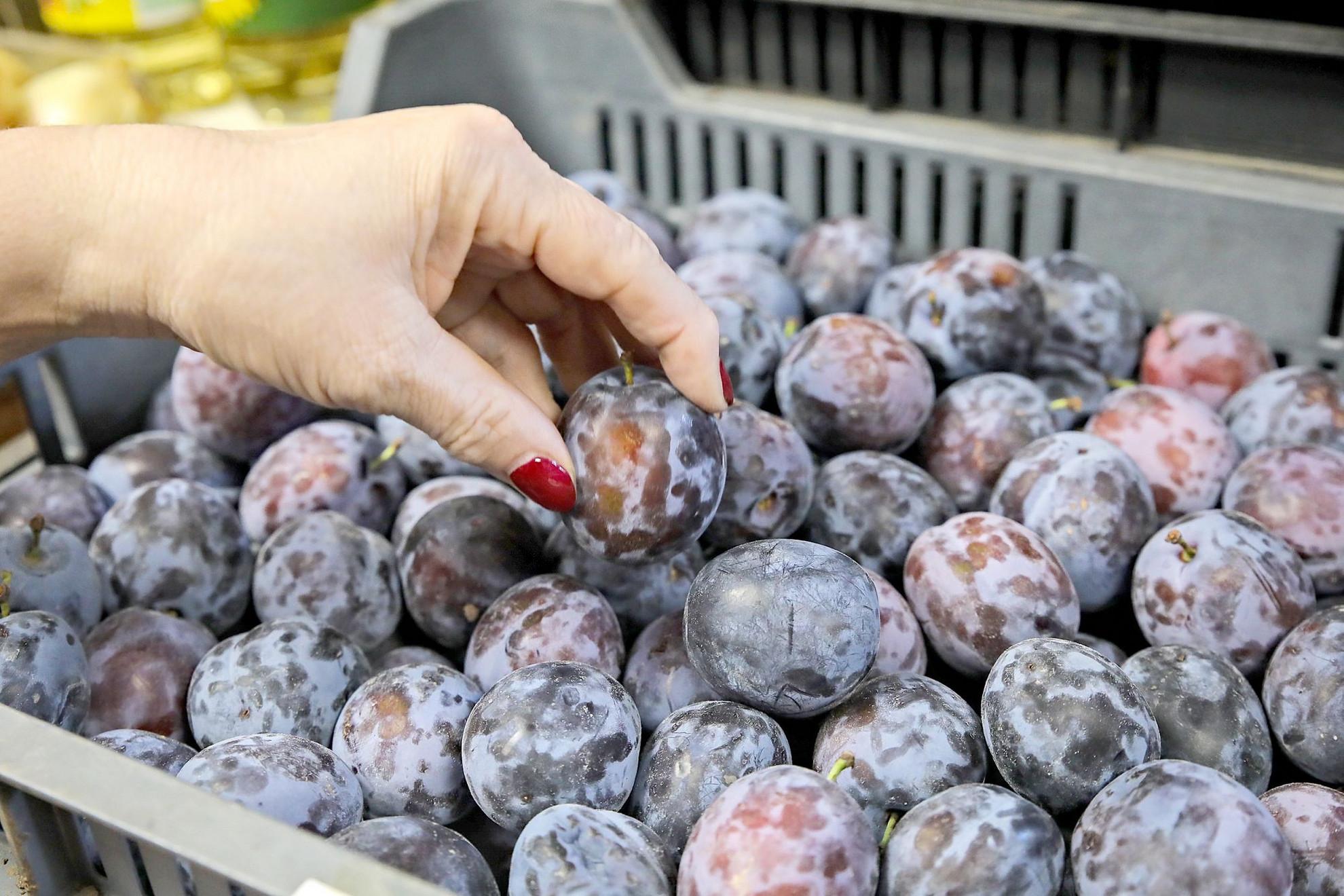 Több ezer hektár új, teljesen korszerű gyümölcsültetvény jöhet létre 2027-ig