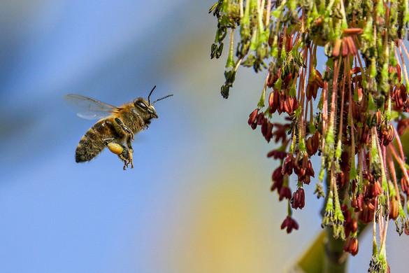Vigyázzunk a méhekre, nélkülük nincs élet