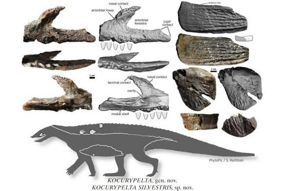 Krokodilszerű őshüllőfaj maradványaira bukkantak Lengyelországban
