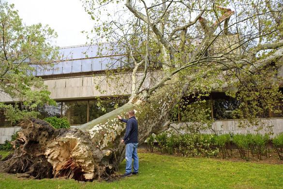 Pest megyében és Budapesten is károkat okozott a viharos szél