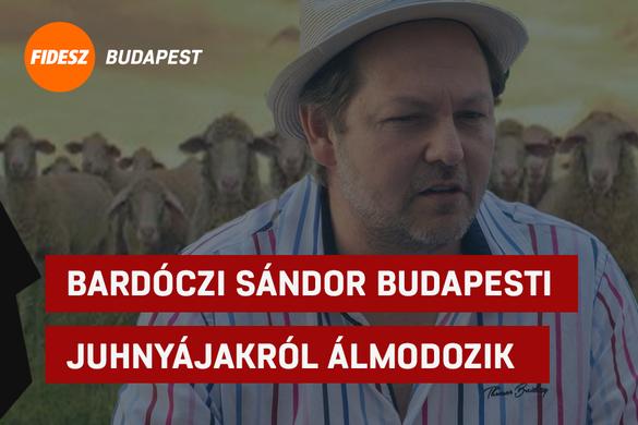 Bardóczi Sándor budapesti juhnyájakról álmodozik