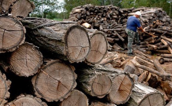 Fokozottan ellenőrzi az erdei faválasztékot szállítókat a Nébih