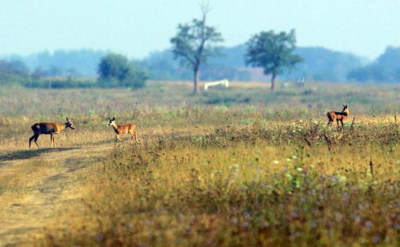 Több ezer hektár legelőt ad bérbe a Hortobágyi Nemzeti Park Igazgatóság