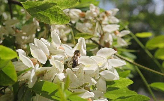 méhek 20160511