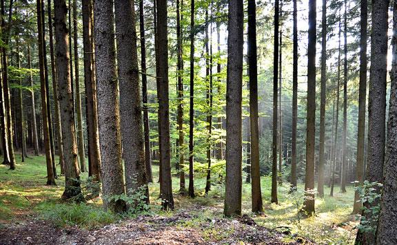 """""""Visszavadítják"""" az erdőket egy természetvédelmi program keretében"""