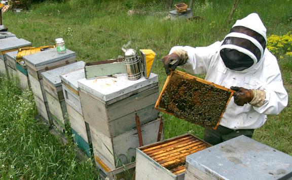 Támogatások és programok segítik a méhészet versenyképességének növelését