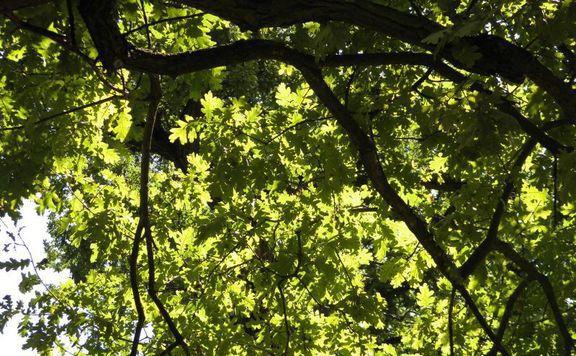 Cél Magyarország erdős, fás felületeinek növelése